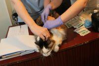 Кошки тоже подвергаются вакцинации.