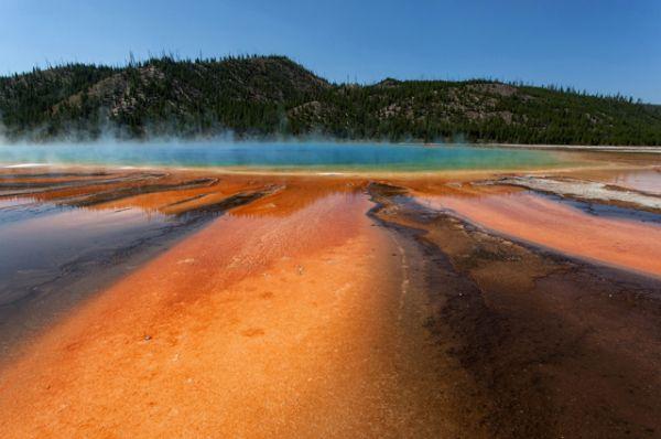 В летний период бактерии становятся оранжево-красными, а в зимний, как правило, тёмно-зелёными.