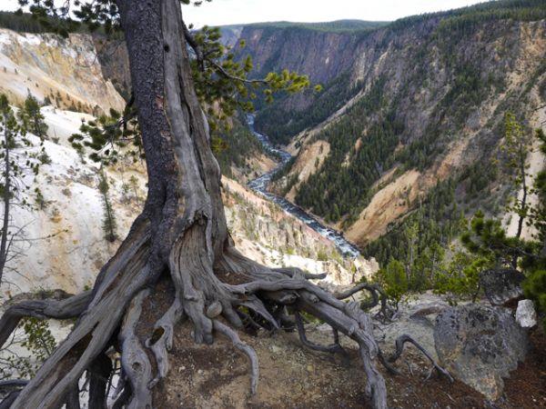 Нижний Водопад и каньон реки Йеллоустон.
