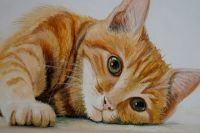 На выставке можно найти фото и портреты кошек.