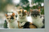 1 марта в России отмечается день кошек.
