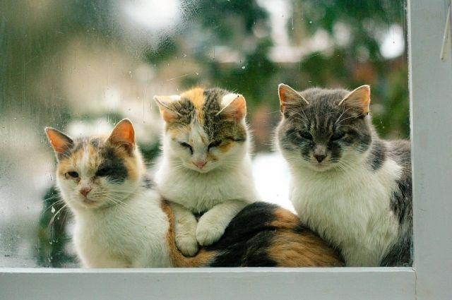 Досуг для кота