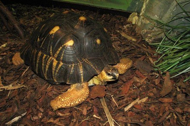 Черепаха по имени Рада