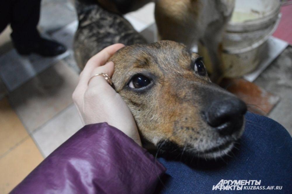 Многие норовят лизнуть руку, залезть на приходящих, попасть под ладошку, которая бы погладила собак.