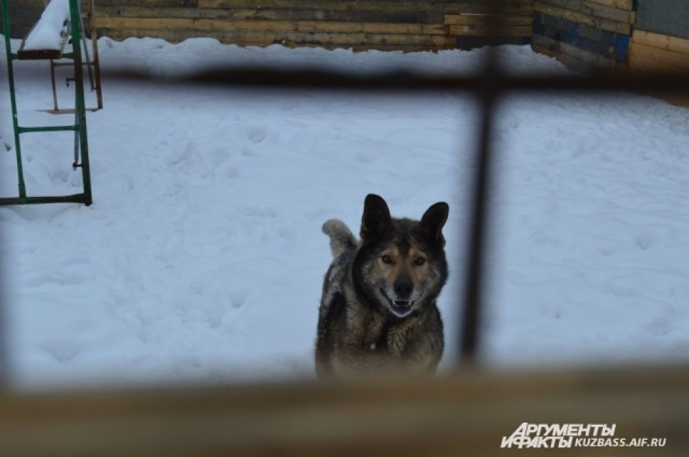 В приюте живет 94 собаки и больше 50 кошек - почти в раз их количество увеличилось со времени переезда.