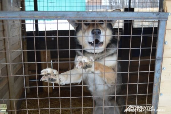 Собаки живут в отдельных 2 помещениях (и одно на улице): для дворовых и комнатных животных. Тесное соседство друг с другом не мешает им жить спокойно и мирно.