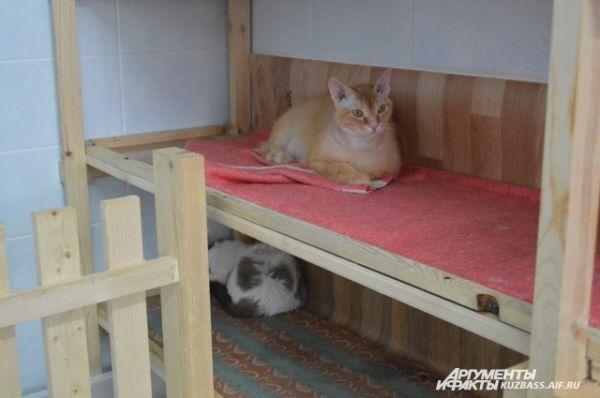 У кошек есть отдельные «спальные полки», застеленные тряпочкой, (отдыхать на них гораздо удобнее, чем на полу) и большой домик-когтеточка - есть, с чем поиграть.