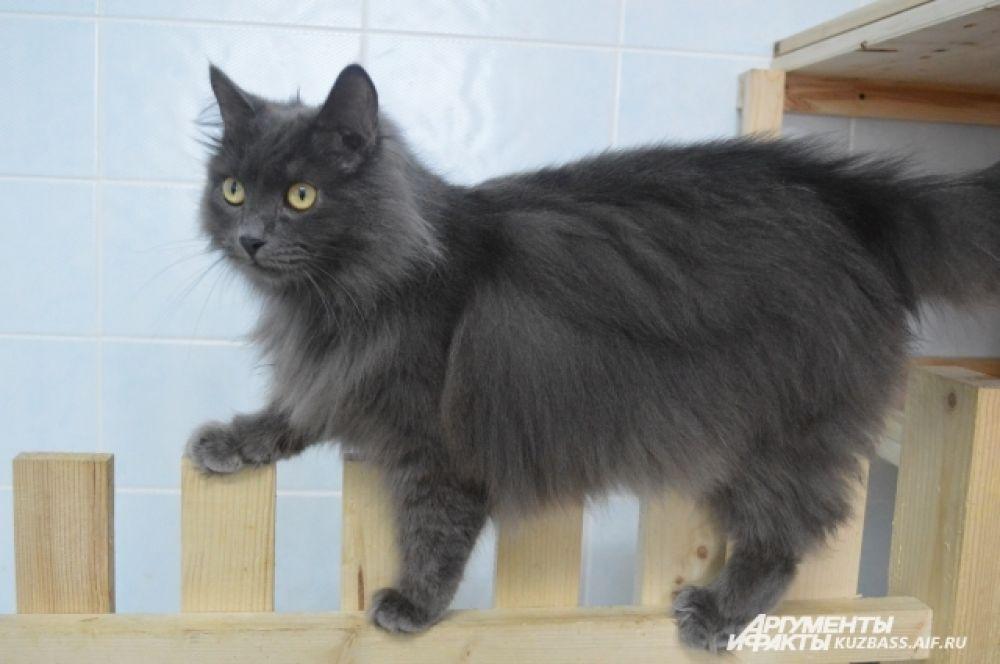 В тёплом помещении с отдельной мойкой находятся кошки всевозможных окрасов и характеров.