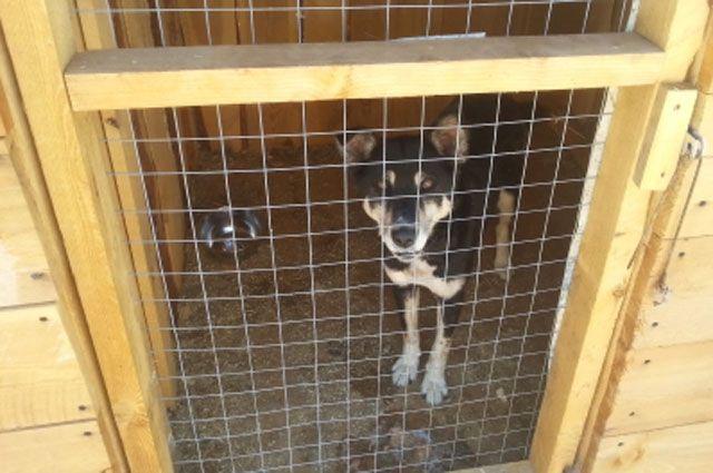Передержки для беспризорных собак запретят