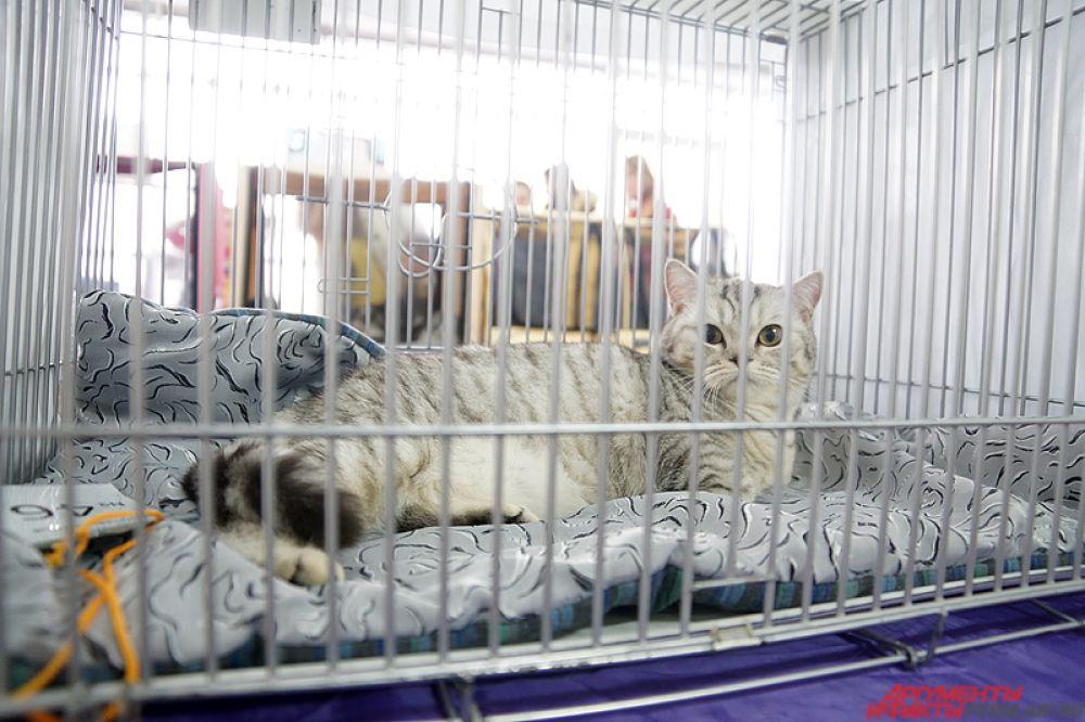 Часть ушастых сидела в клетках.