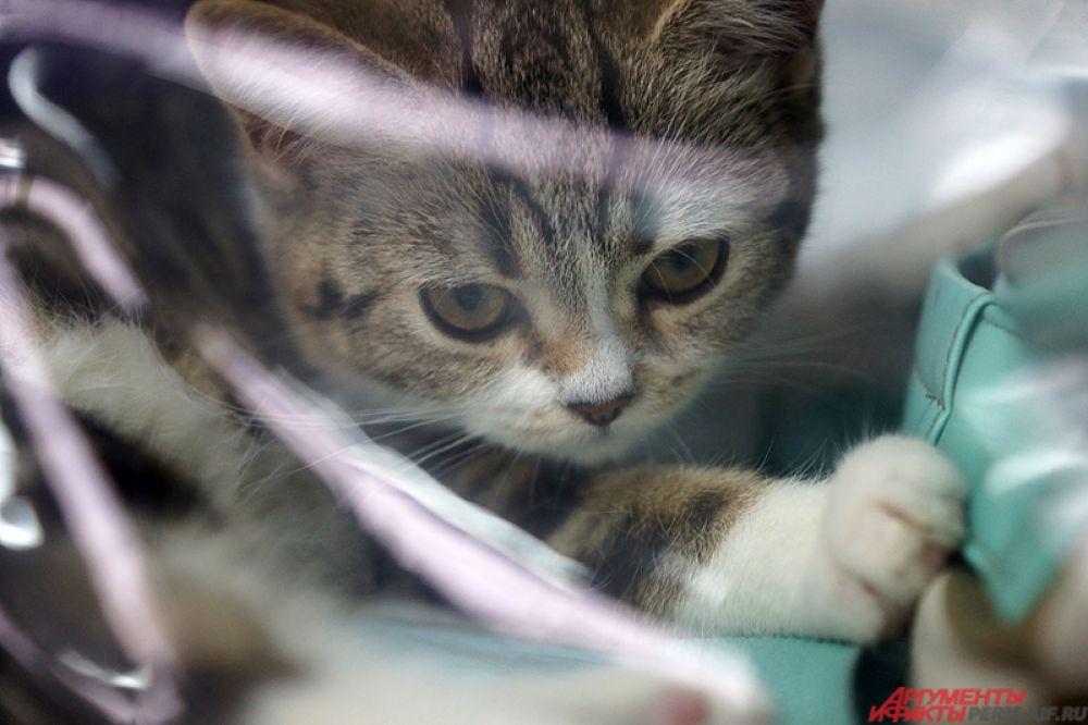 Выставка кошек продлится два дня – 4 и 5 марта.