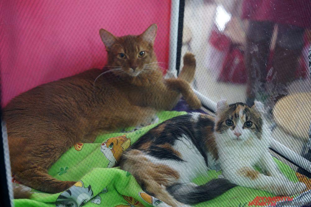 Кошки находились сразу по несколько пар в одном импровизированном вольере.