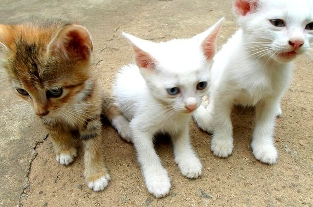 Маленькие котята нуждаются в заботе мамы.