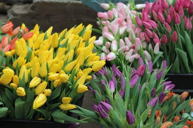 Свежие тюльпаны к празднику в дефиците.