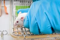 Эксперименты намышах показали, что полная победа над онкологией возможна.