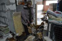 Животных сейчас приют не принимает, так как помещать собак и кошек попросту некуда, а кормятся они только на средства волонтёров и помощников.