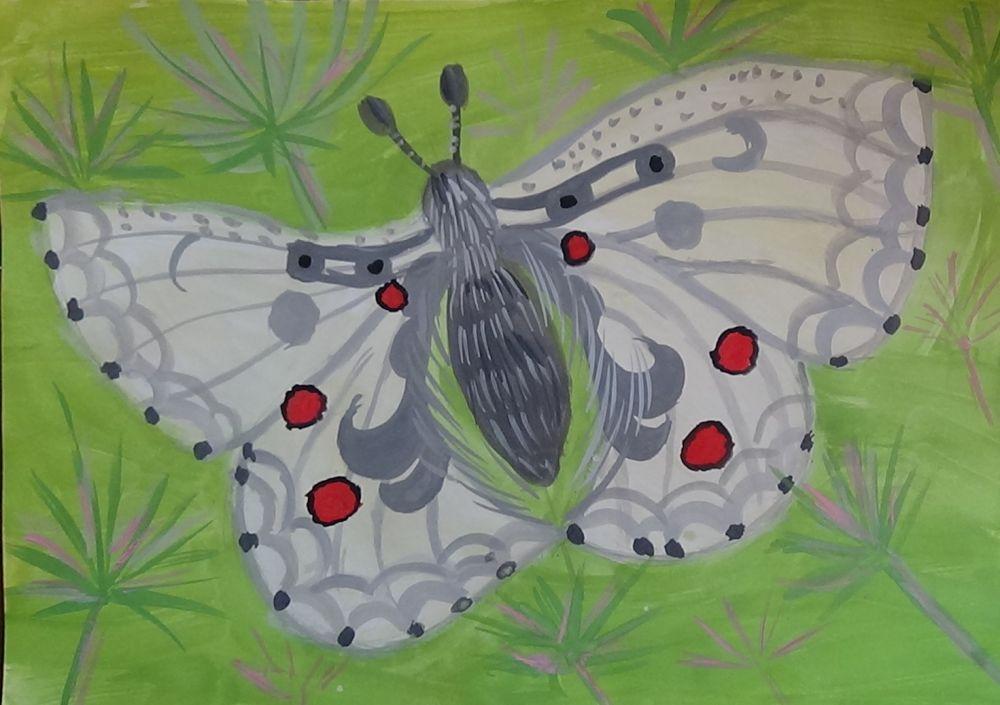 «Бабочка Аполлон»