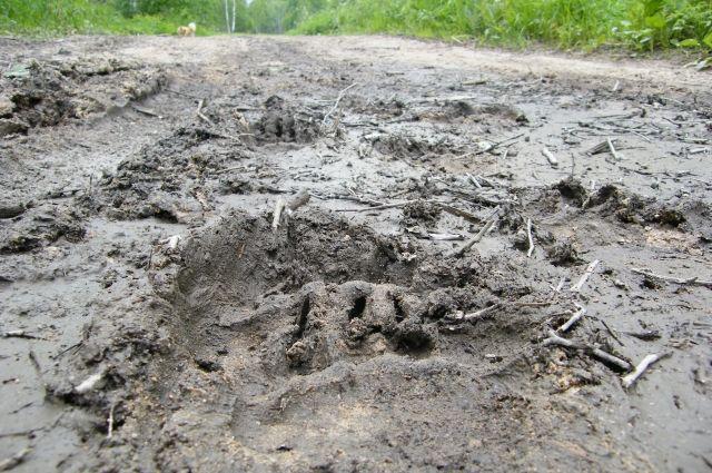 На Ямале установили срок подачи заявлений на охоту на лося, медведя и выдру