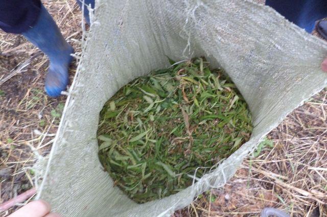 По месту жительства подозреваемых нашли 61 кг 390 граммов марихуаны.