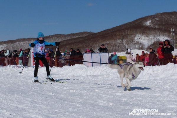 Скиджоринг — одна из дисциплин ездового спорта, в котором лыжник-гонщик передвигается свободным стилем по лыжной дистанции вместе с одной или несколькими собаками.