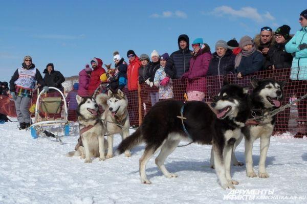 Основным событием праздника стала гонка на собачьих упряжках.