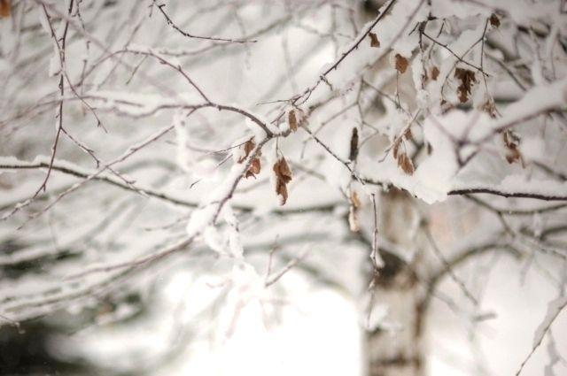 Весна пока не балует новосибирцев теплой погодой