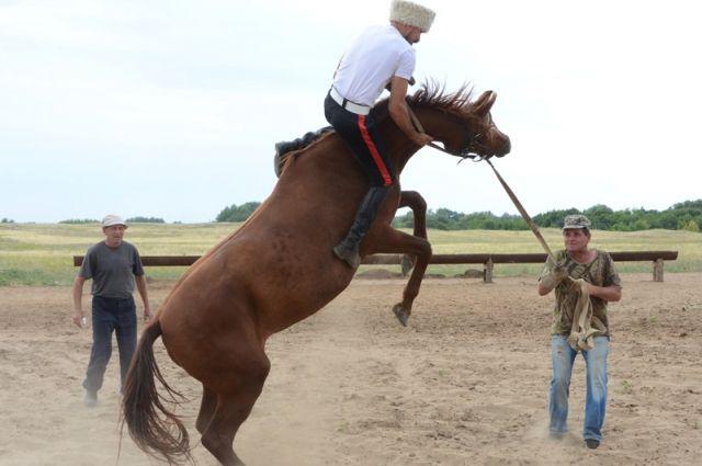 ВРостовской области весной откроется конный центр