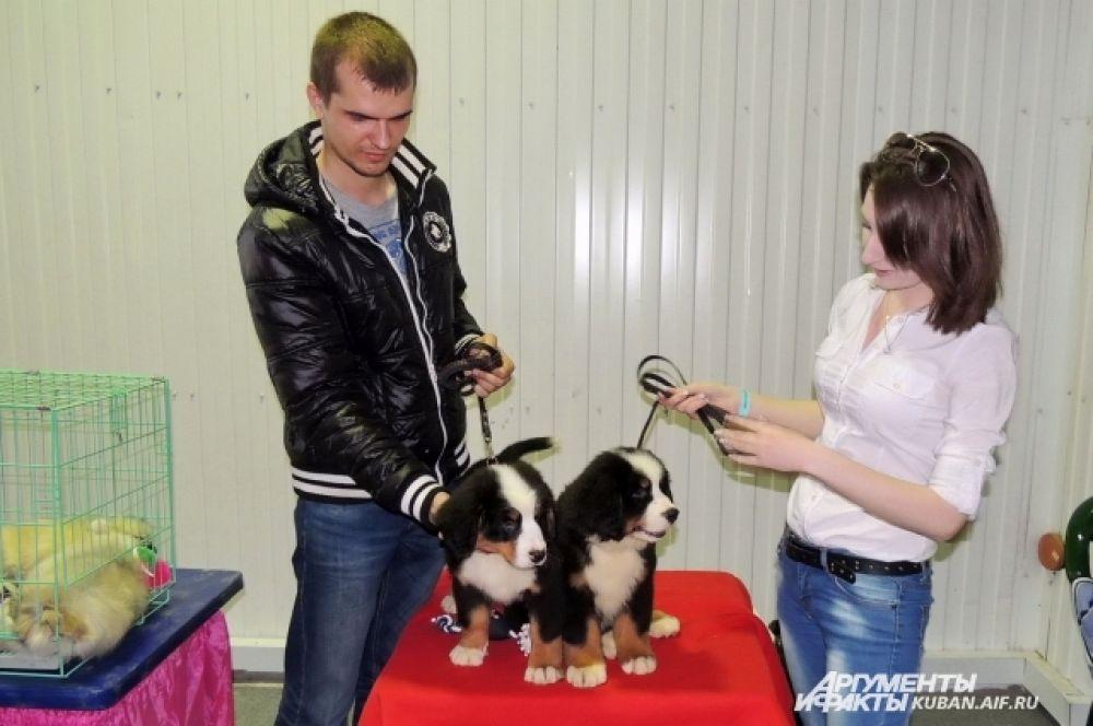 На выставке можно было приобрести элитных щенков.