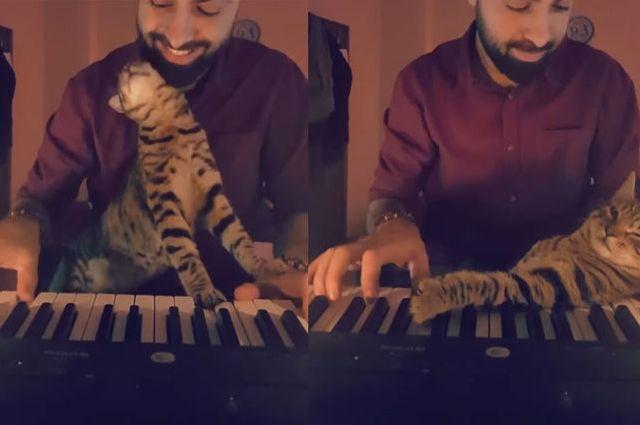 Кот-меломан иногда «помогает» своему хозяину, подыгрывая лапами по клавишам