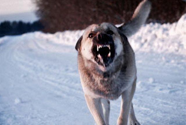 Хозяин предупреждал, что собака злая.