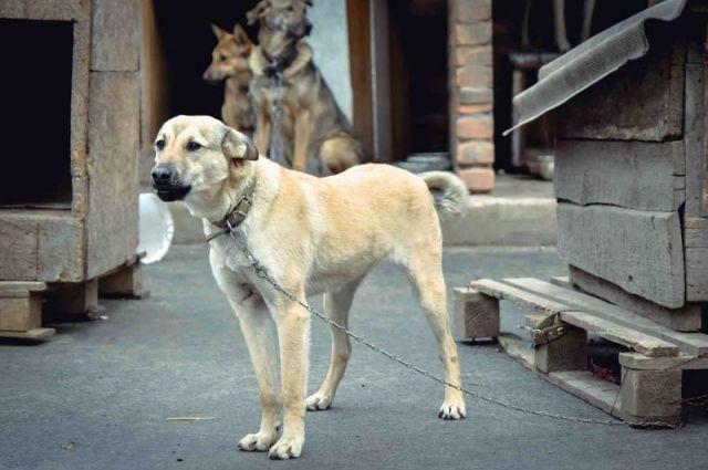Работу Центра безнадзорных животных реорганизуют вРостове