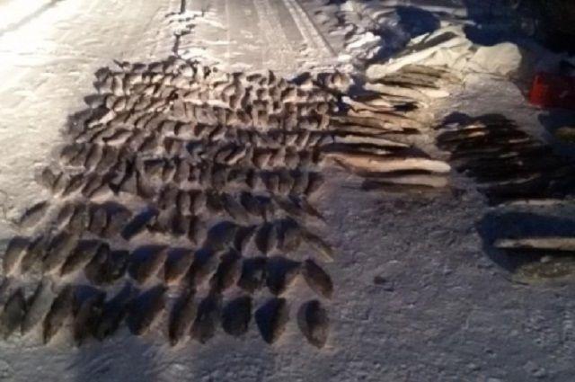 В Салехарде задержано три партии незаконно добытой рыбы