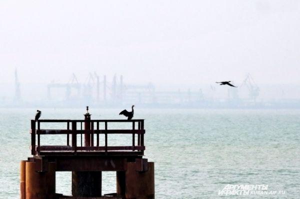 Птицы уже облюбовали конструкции будущего моста.