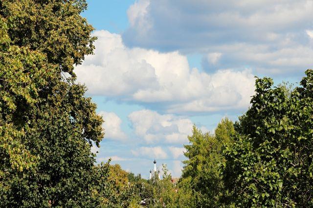 Внынешнем году вВоронежской области посадят 2 тысячи гектаров леса