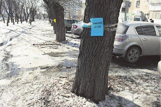 Жители микрорайона обклеили деревья, которые должны срубить, листками с призывами о помощи.