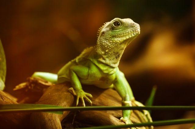 При домашнем содержании рептилий главное всегда соблюдать правила ухода за ними.
