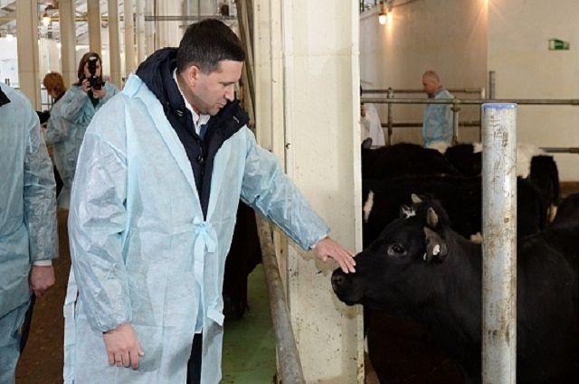 На Ямале увеличится производство молока