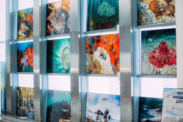 Торжественное открытие выставки состоится 17 марта в 16:00 в фойе киноконцертного зала «Пенза».