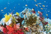 Если человечество не сможет остановить глобальное потепление, то коралловые рифы могут исчезнуть