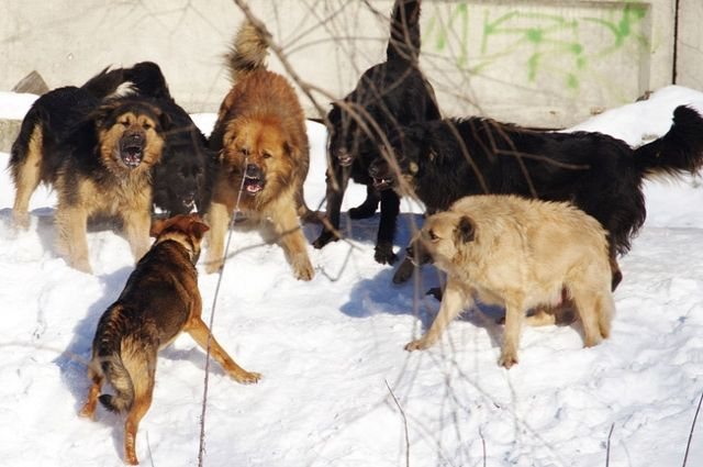 ВВоронежской области санврачи отыскали бешенство улисицы и5 собак