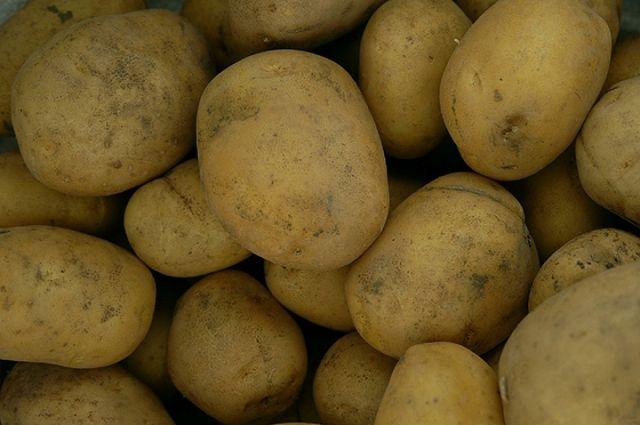 Воры увезли насанках 360кг картошки
