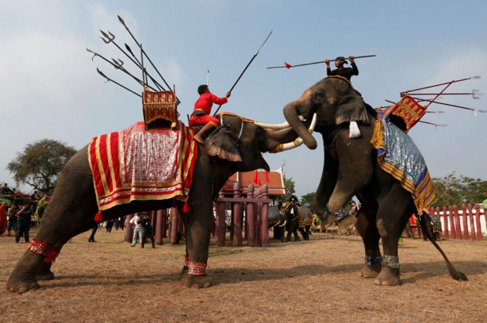 13 марта. В Таиланде проходит один из самых значимых национальных праздников — День слона.