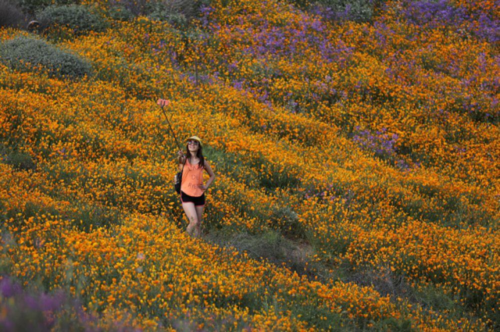 14 марта. В южной Калифорнии после влажной зимы зацвели пустынные холмы.