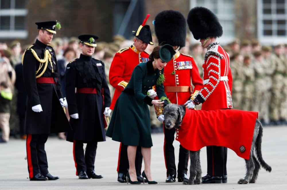 Принц Уильям и Герцогиня Кембриджская Кэтрин в этот день посетили традиционный военный парад в Лондоне, где раздали трилистники всем участникам, в том числе, ирландскому волкодаву по имени Домналл.