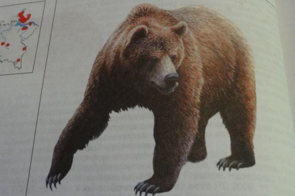 Медведь бурый. Этот «краснокнижный» хищник обычно обитает в лесах на севере республики, но иногда его встречают в Верхнеуслонском, Тетюшском, Высокогорском и Зеленодольском районах. С конца XX века происходит устойчивый рост численности: в Татарстане постоянно обитает до 90 особей. Однако много медведей гибнут в первые годы жизни и на дорогах.