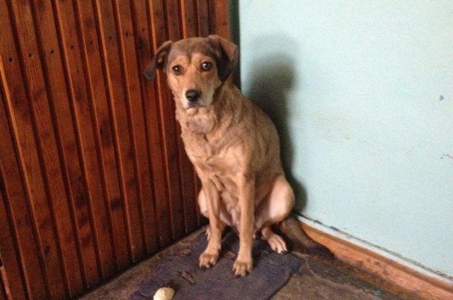 После того как хозяина увезли, собака осталась ждать его под дверью.
