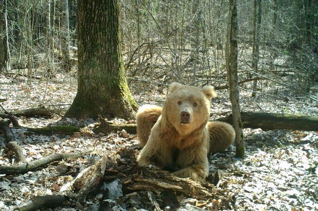 Выгул медведя во дворе многоэтажного дома в Таганроге выложили в интернет