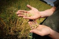 Данные по запасу зерна предоставил Росстат