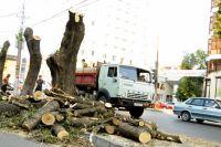 """Елена Плешкова: """"Деревья постоянно исчезают с наших улиц. За четыре года только в Ленинском районе исчезло три тысячи""""."""