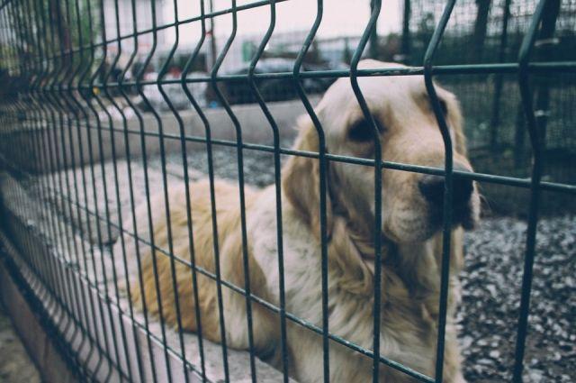 ВИшиме бешеный пес искусал хозяйку Сегодня в16:51